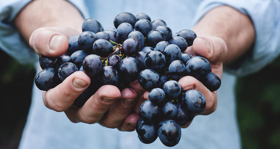 man holding wine grapes in both hands