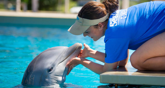 dolphin trainer working with dolphin at seaworld san antonio