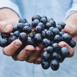 man holding purple wine grapes